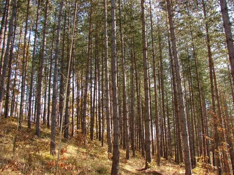 Оправданият в дело за бракониерство прокурор – само се разхождал с пръчка в гората